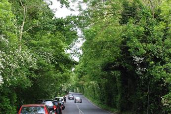 Canopy of trees, Barnet